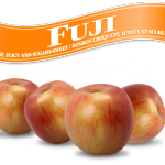 Fuji=フジ 林檎